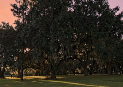 Lush 33 Acres of trees at The Estates at Carpenters in Lakeland, Florida.